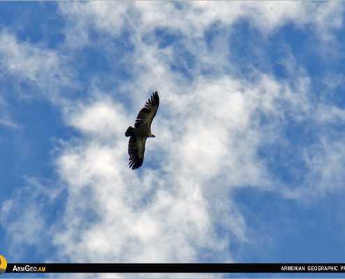 Թռչնադիտարկում